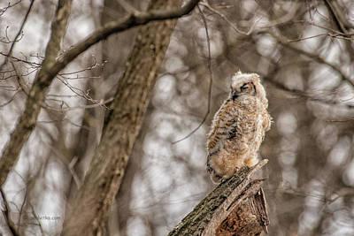 Photograph - Adolescent Owl 07.... by Paul Vitko
