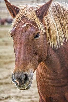 Photograph - Adopt A American Wild Horse by LeeAnn McLaneGoetz McLaneGoetzStudioLLCcom