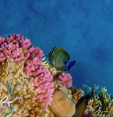 Photograph - Adorable And Beautiful Red Sea 2 by Johanna Hurmerinta