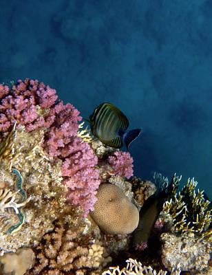 Photograph - Adorable And Beautiful Red Sea by Johanna Hurmerinta