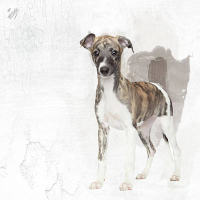 Brindle Digital Art - Adorable Brindle Whippet Puppy by iMia dEsigN