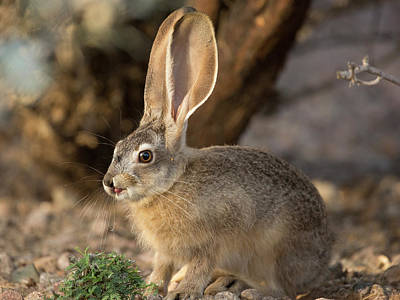 Photograph - Adorable Bunny by Sue Cullumber