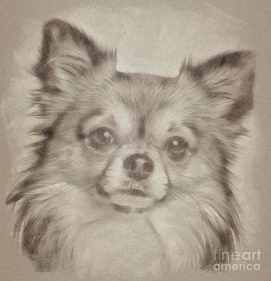 Animals Drawings - Adorable Dog by Esoterica Art Agency