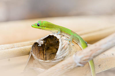Juan Bosco Forest Animals Royalty Free Images - Adorable Gecko Royalty-Free Image by Windy Corduroy