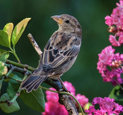 Adorable House Finch Art Print by Jim Moore