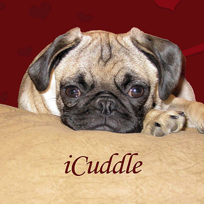 Painting - Adorable Icuddle Pug Puppy by Patricia Barmatz