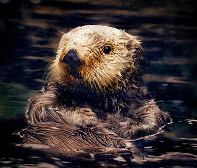 Adorable Sea Otter Art Print by Jean Noren