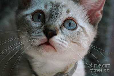 Art Print featuring the photograph Adorable Kitty  by Kim Henderson