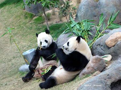 Adorable Pandas Art Print by Ming Yeung