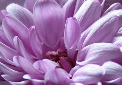 Photograph - Adorable Pink by Johanna Hurmerinta