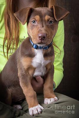 Adorable Photograph - Adorable Puppy by Edward Fielding