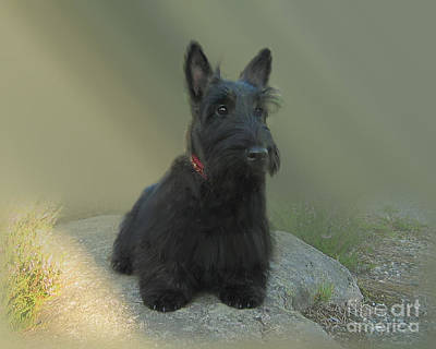 Photograph - Adorable Scottie On The Rocks Scottish Terrier   by Heinz G Mielke