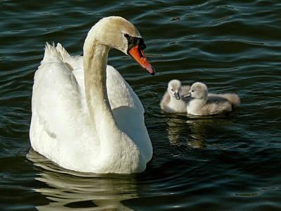 Photograph - Adoring Mother by Inge Riis McDonald