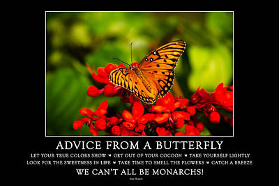 Photograph - Advice From A Butterfly by Teri Virbickis