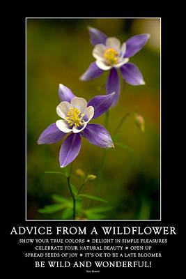 Photograph - Advice From A Wildflower by Teri Virbickis