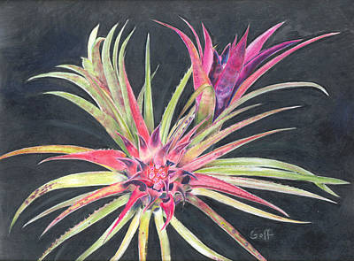 Epiphyte Painting - Aechmea Recurvata Var. Ortgiesii by Penrith Goff
