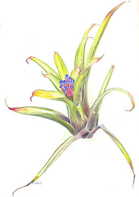 Epiphyte Painting - Aechmea Suenos by Penrith Goff