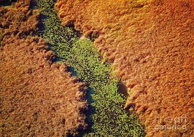 Aerial Farm Stream Lillies  Art Print