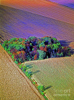 Photograph - Aerial Farm Tree Top Grv. by Tom Jelen