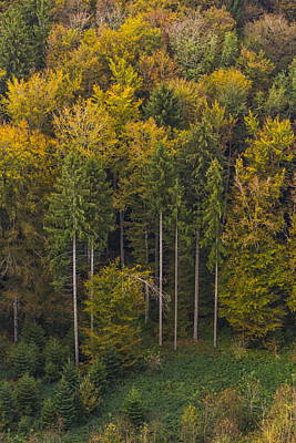 Photograph - Aerial View Of Autumn Trees by Elenarts - Elena Duvernay photo