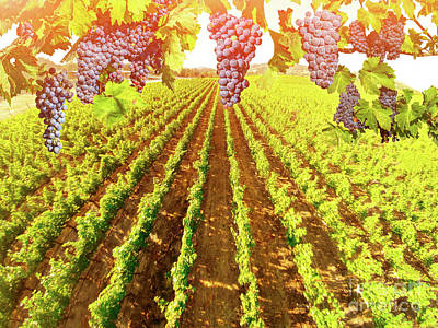 Photograph - Aerial View Of Vineyard Landscape by Benny Marty