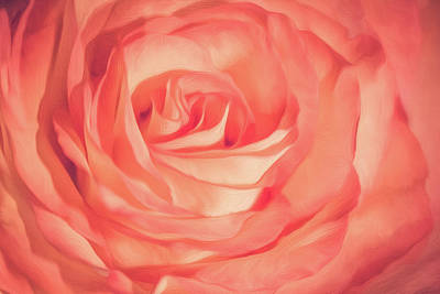 Photograph - Aesthetics Of A Rose by Elvira Pinkhas
