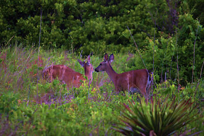 Photograph - Affectionate Deer by Roberta Byram