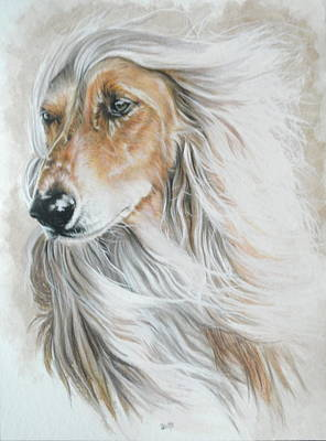 Colored Pencil Mixed Media - Afghan Hound by Barbara Keith