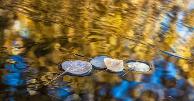 Photograph - Afloat by Jonathan Nguyen