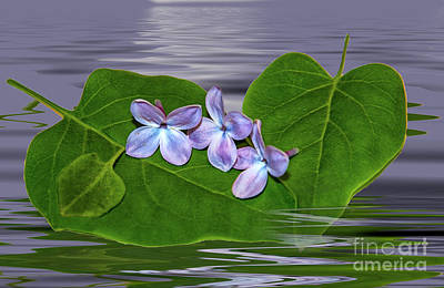 Digital Art - Afloat by Maggie Magee Molino