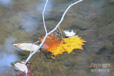Photograph - Afloat by Maria Urso