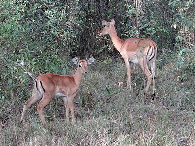 Explorason Photograph - Africa - Animals In The Wild 2 by Exploramum Exploramum