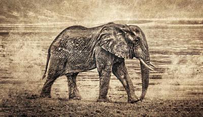 Epic Digital Art - Africa Series - Elephant by Brett Pfister
