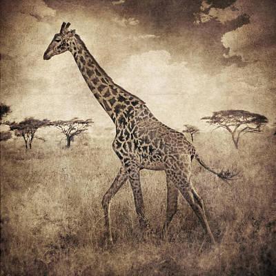 Africa Series - Giraffe Art Print by Brett Pfister