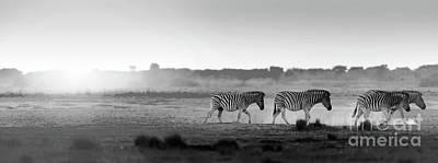 Africa Sunset Landscape Black And White Art Print