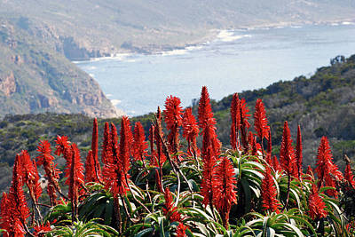 African Aloe And False Bay Art Print