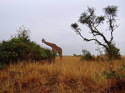 Exploramum Wall Art - Photograph - African Animals On Safari - A Child's View Of A Giraffe by Exploramum Exploramum