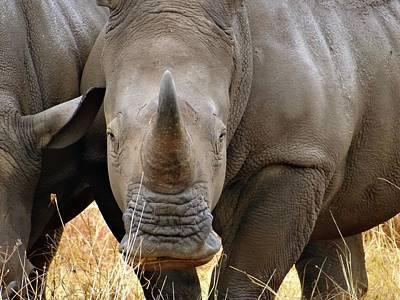 Exploramum Wall Art - Photograph - African Animals On Safari - One Very Rare White Rhinoceros Right Angle - Front On by Exploramum Exploramum