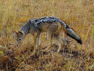 Exploramum Wall Art - Photograph - African Animals On Safari - The Predator by Exploramum Exploramum