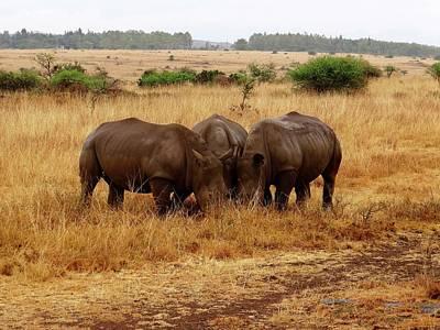 Exploramum Photograph - African Animals On Safari - Three Very Rare White Rhinoceros Grazing by Exploramum Exploramum