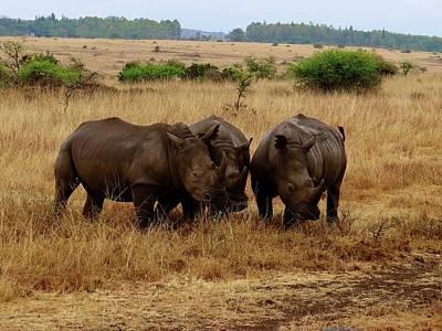 Exploramum Wall Art - Photograph - African Animals On Safari - Three Very Rare White Rhinoceroses 1 by Exploramum Exploramum