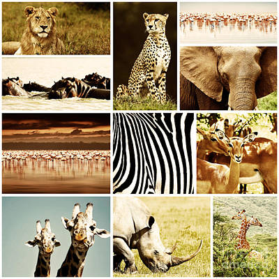 African Animals Safari Collage  Print by Anna Om