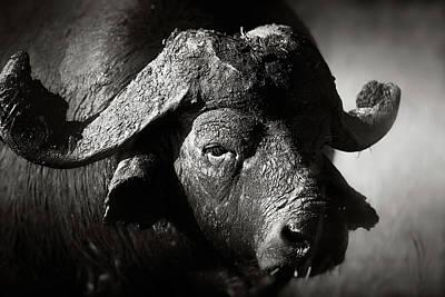 Animals Photos - African buffalo bull close-up by Johan Swanepoel