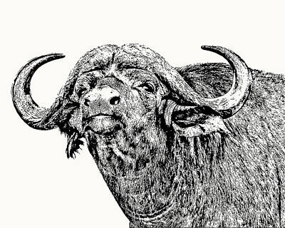 Art Print featuring the photograph African Buffalo Bull Portrait by Scotch Macaskill