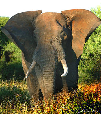 Photograph - African Bull Elephant by Joseph G Holland