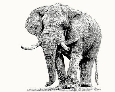 Photograph - African Bull Elephant With Fine Tusks by Scotch Macaskill