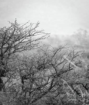 African Bush Black And White Art Print
