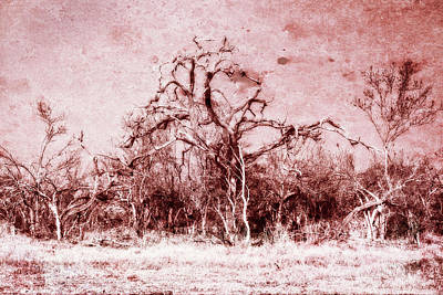 Photograph - African Bush Through Rose Colored Glasses by Kay Brewer