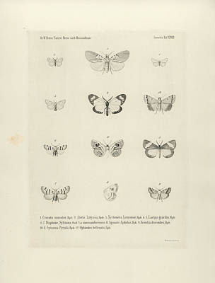 Drawing - African Butterflies by Bernhard Wienker