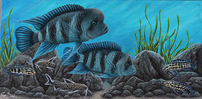 Catfish Drawing - African Cichlids by Ryan Sobel